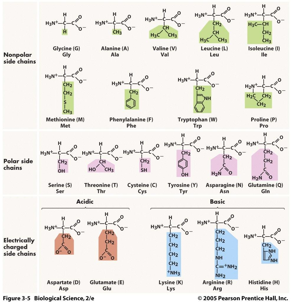 20 Amino Acid One Letter Code.Three Acronym Mnemonics For Remembering The Amino Acids